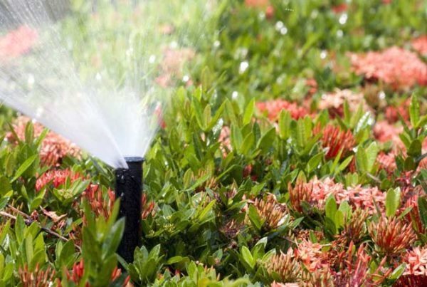 Sprinkler Design, Watermaster Irrigation, Lubbock, Texas