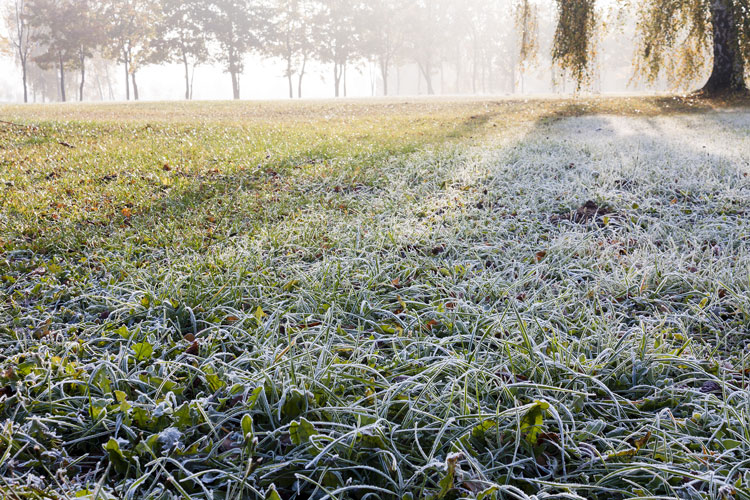 Tips on Watering Your Lawn During the Winter