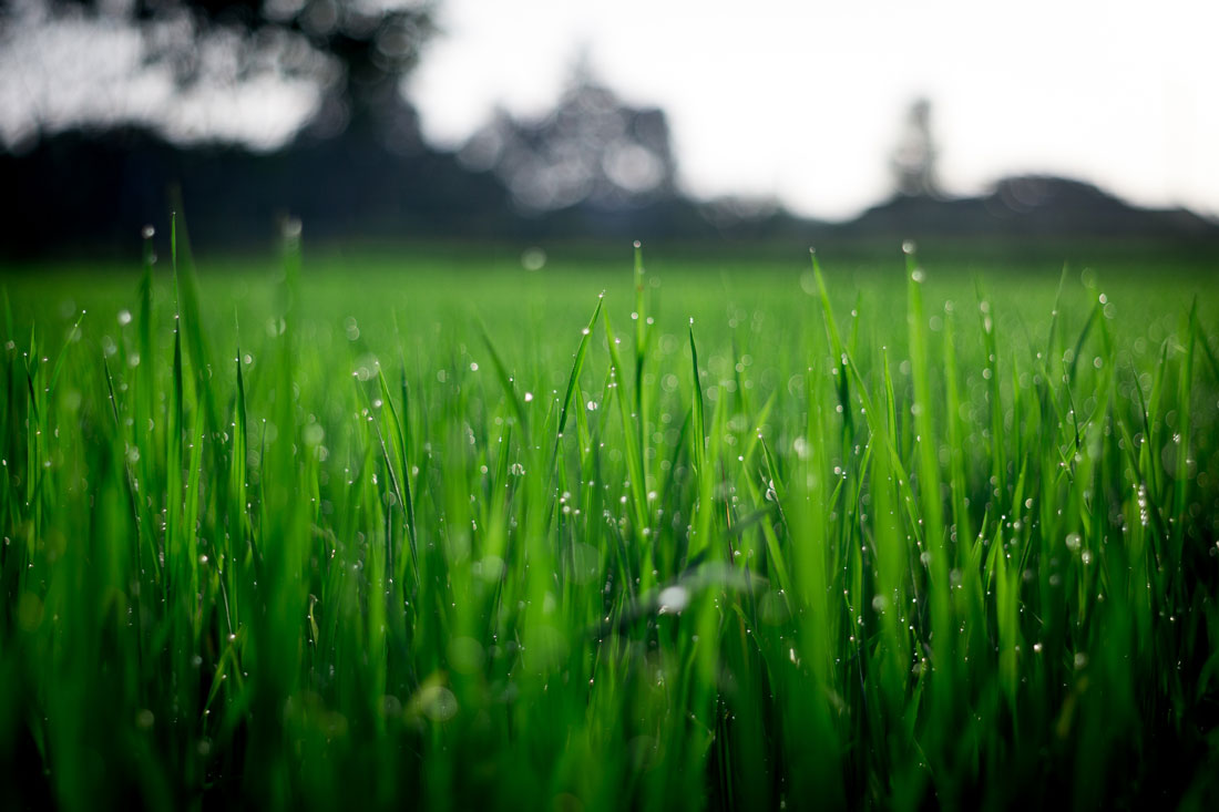 How to Prepare your Lawn this Spring