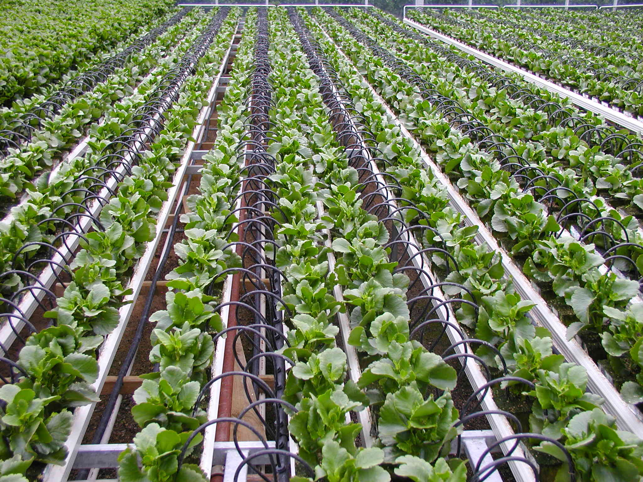 What is Drip Irrigation?