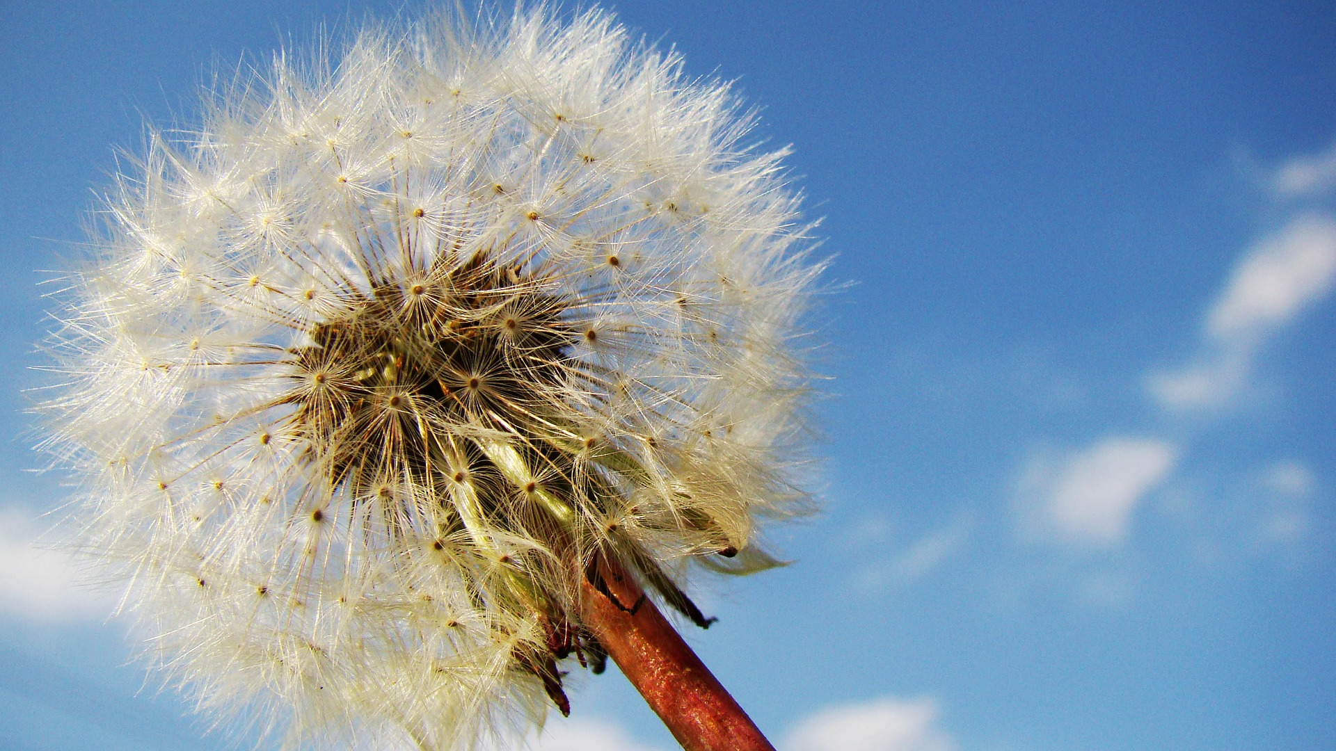 Obnoxious Weeds And How To Get Rid Of Them
