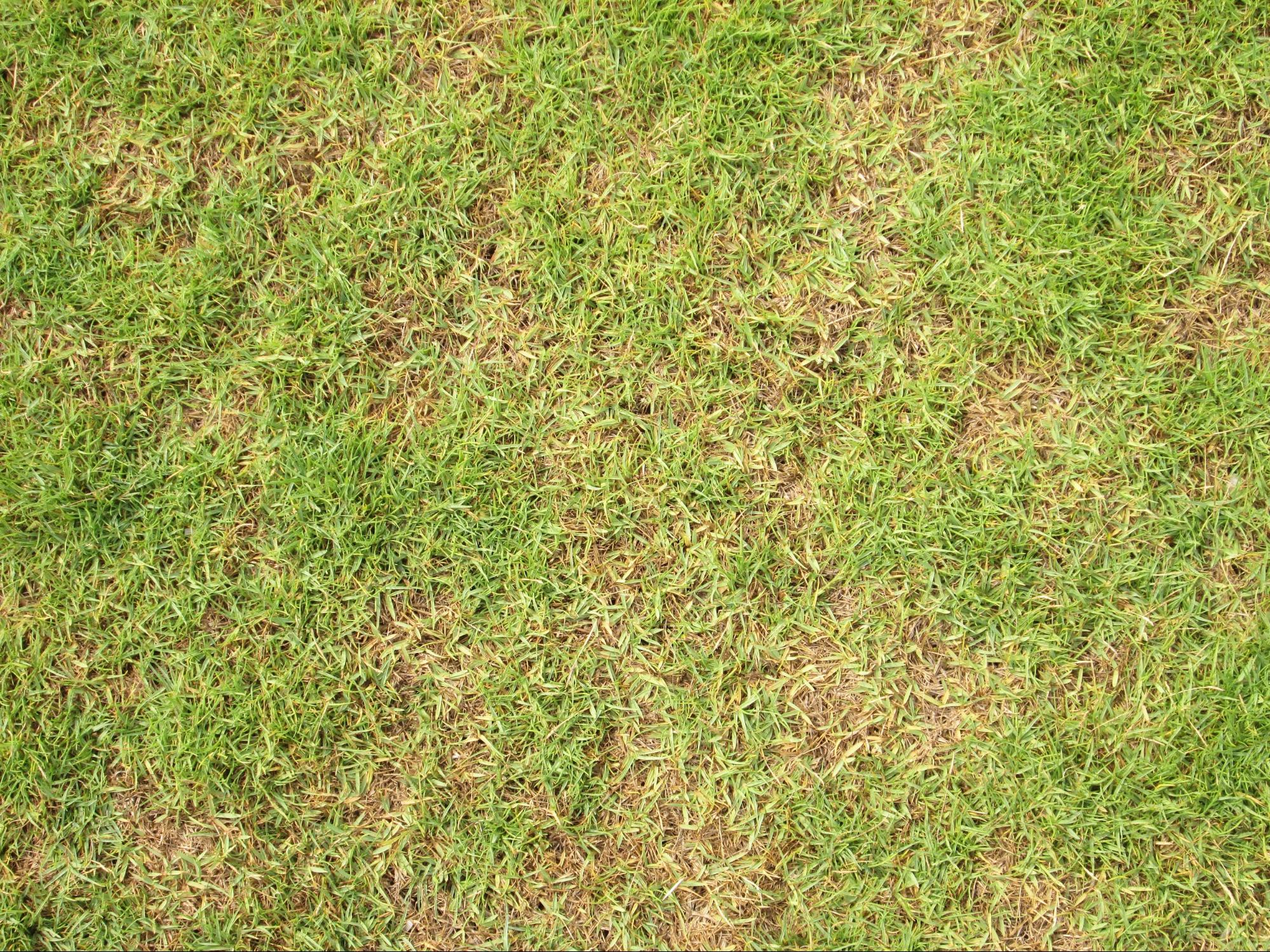 How to treat and prevent brown patch