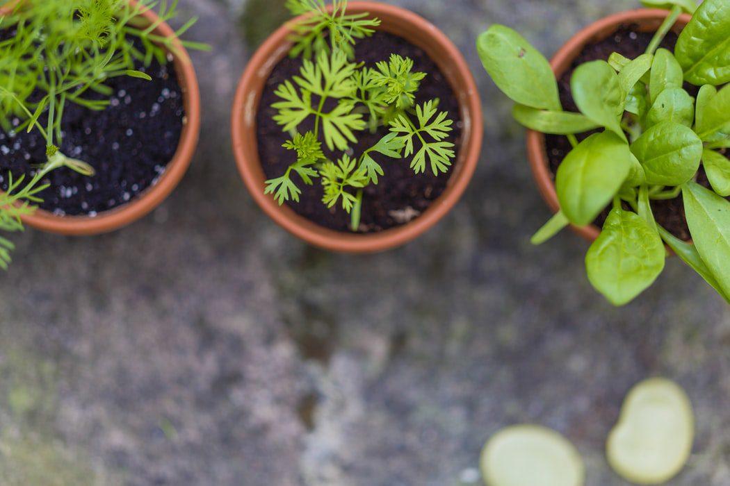 Make Your Own Spice & Herb Garden