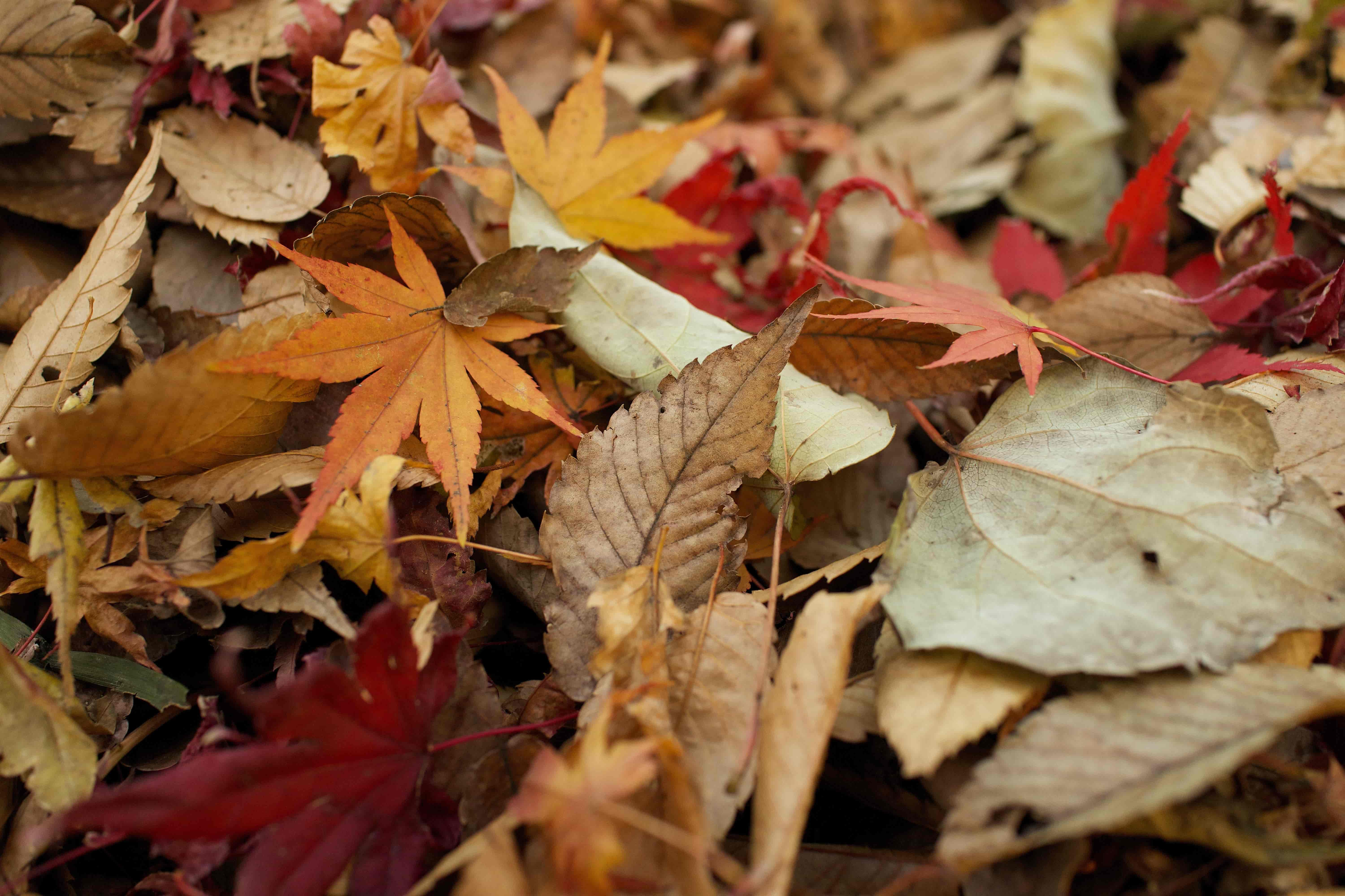 How to Make Compost From Fall Leaves