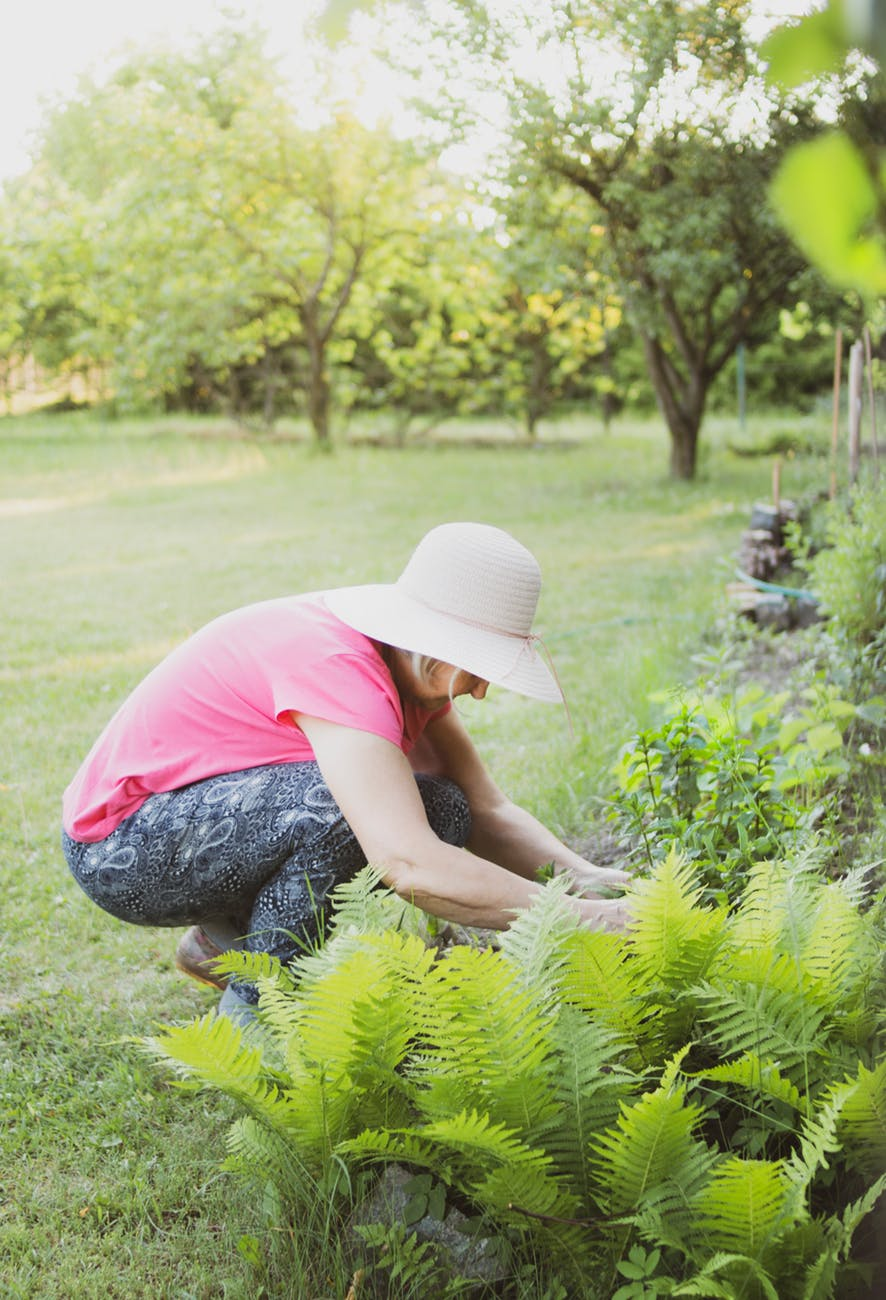 Fall Weed Prevention
