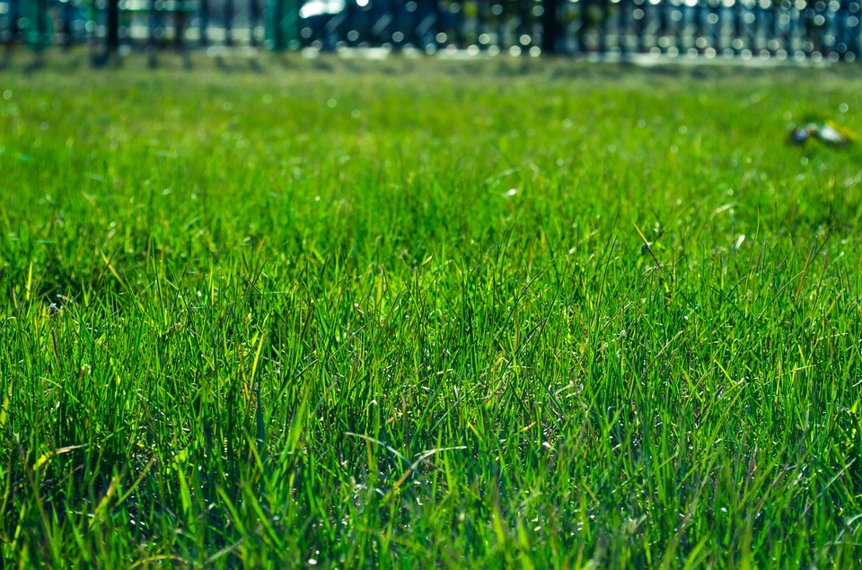 Overseeding Tips For Green Grass Year-Round