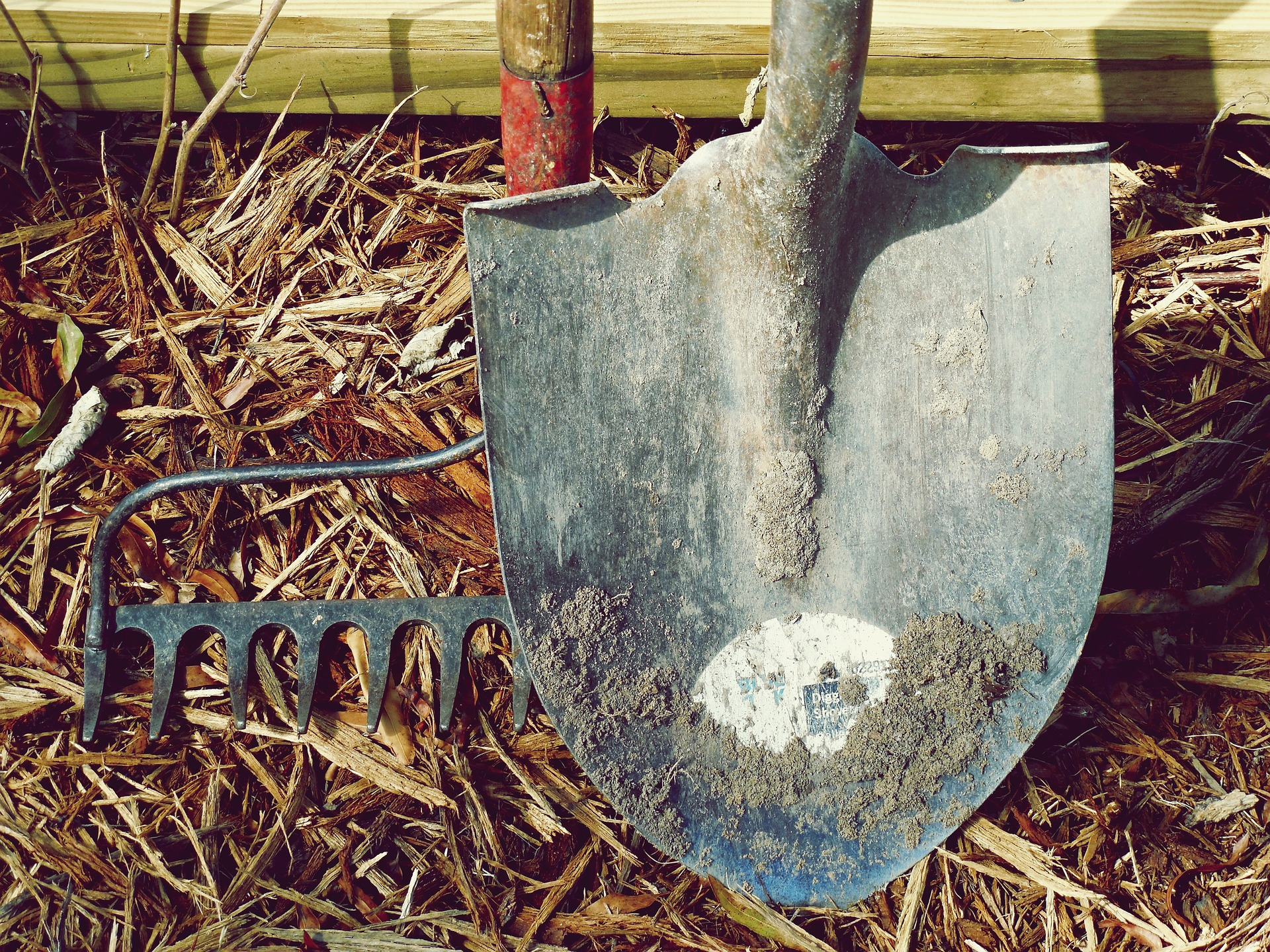 How to Properly Dethatch Your Lawn
