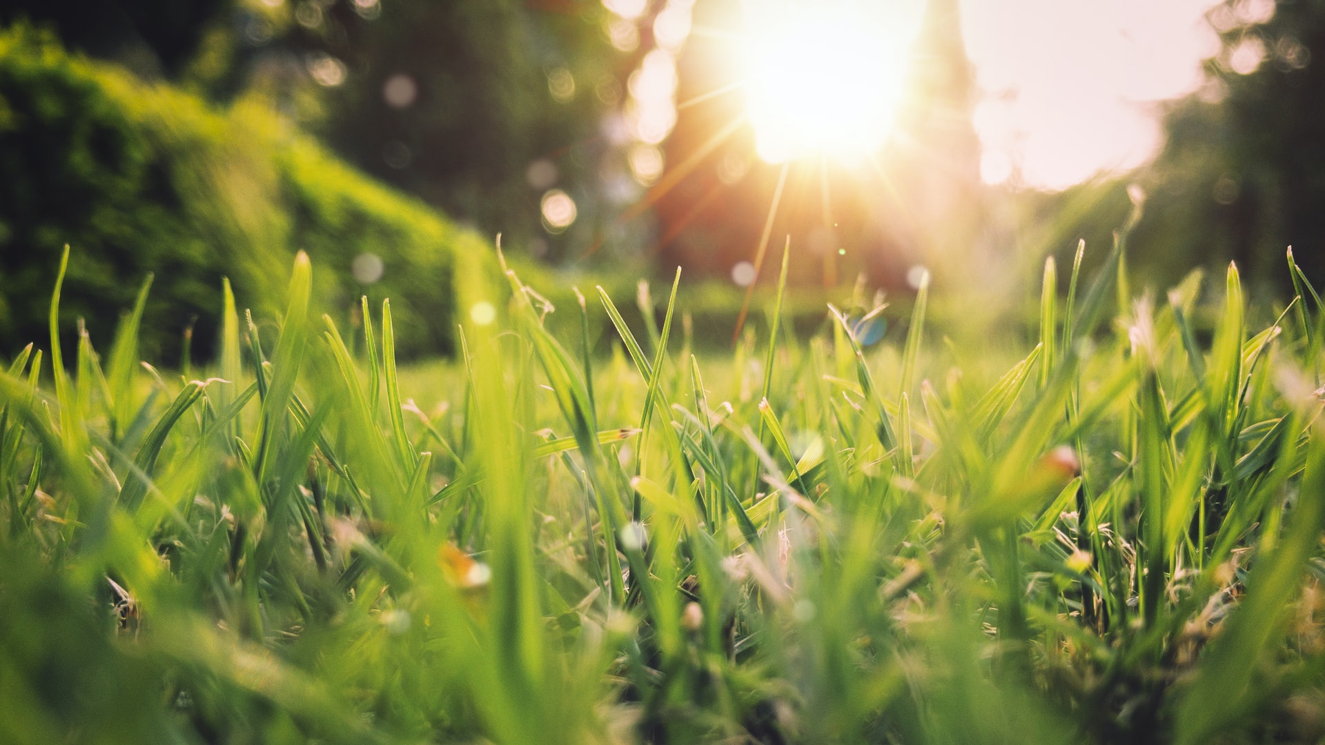 How to Get Your Lawn Ready for Spring